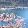 満開の河津桜が彩る「上関城山歴史公園」